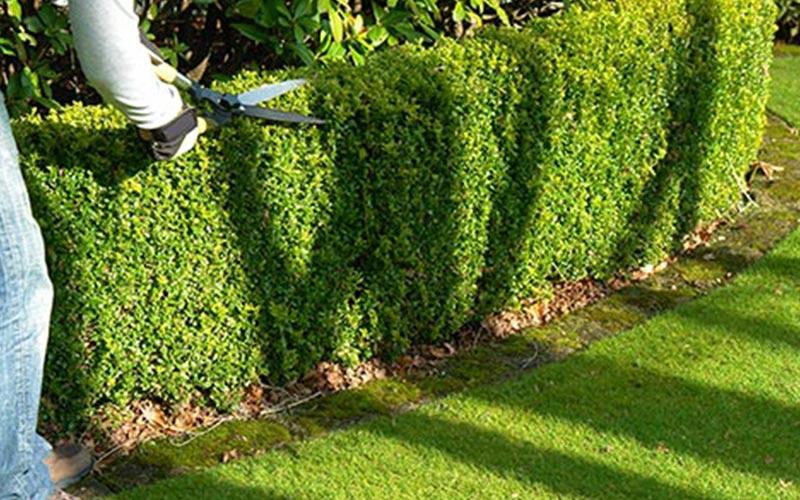 Entretien de jardin la queue les yvelines 78 yvelines for Jardinier paysagiste 78